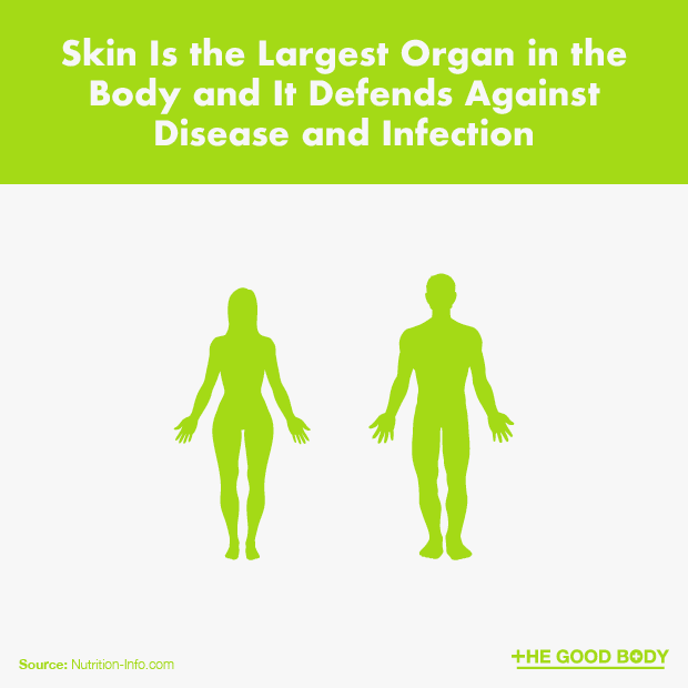 Skin Is the Largest Organ in the Body and It Defends Against Disease and Infection