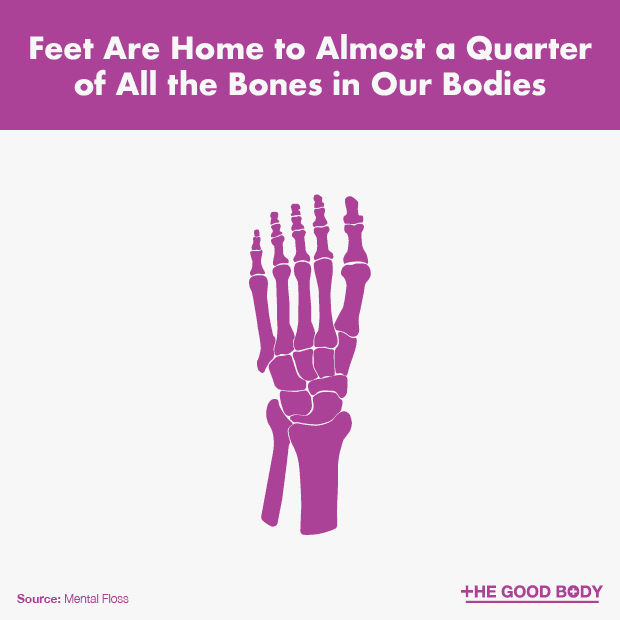 Quick Foot Facts Anatomy Healthy Feet Injuries And Problems Fun
