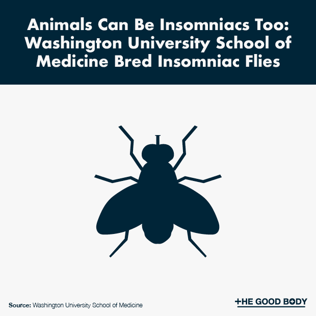 Animals can be insomniacs too: Washington University School of Medicine bred insomniac flies