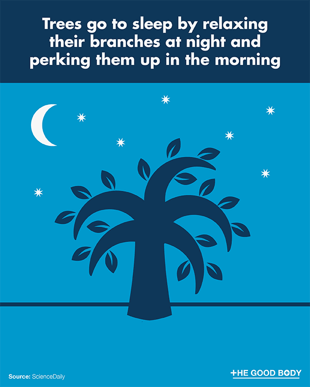 Trees go to sleep by relaxing their branches