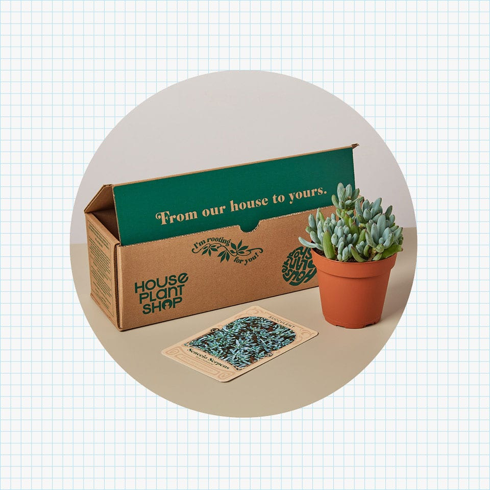 CrateJoy House Plant Box